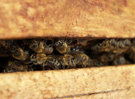 How to Make Fresh Bee Pollen Patties