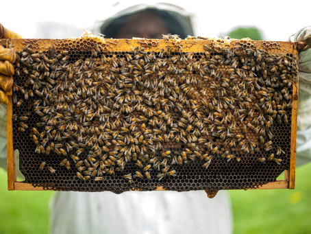"""AN INTRODUCTION TO """"FLUFFY FRESH"""" CALIFORNIA BEE POLLEN"""