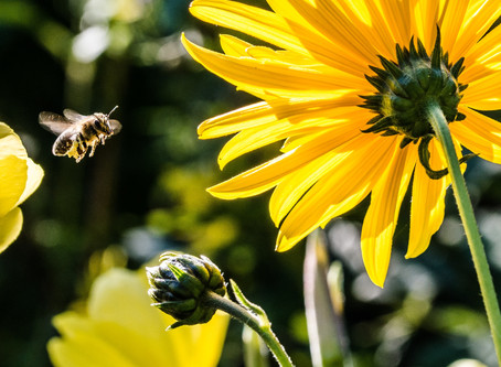 Can You Be Allergic to Fresh Bee Pollen?