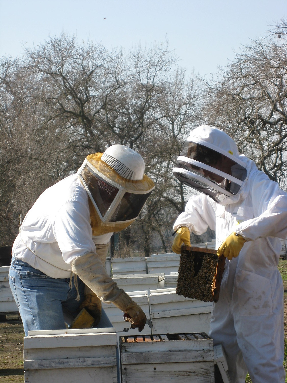 California Beekeepers in Spring