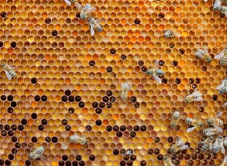 Where does our Fresh Bee Pollen come from?