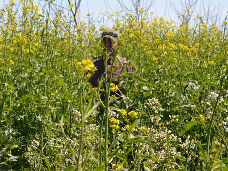 Fresh Bee Pollen & Abundant Spring Flowers