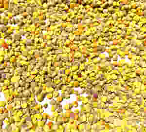 colorful fresh bee pollen