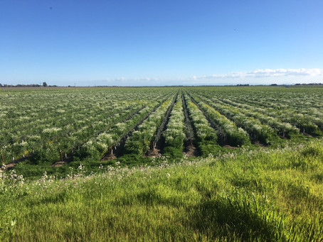 Beehives in the Vineyards