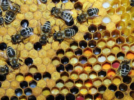 Hip, hip, hive health!