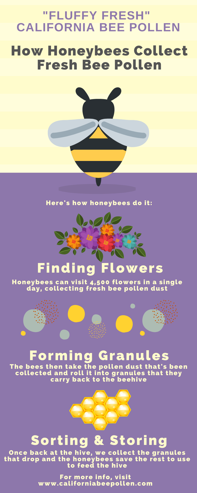 how honeybees collect fresh bee pollen infographic