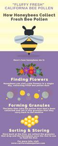 how honeybees collect fresh bee pollen infographic