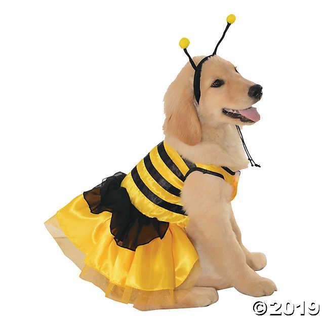 dog in honeybee costume