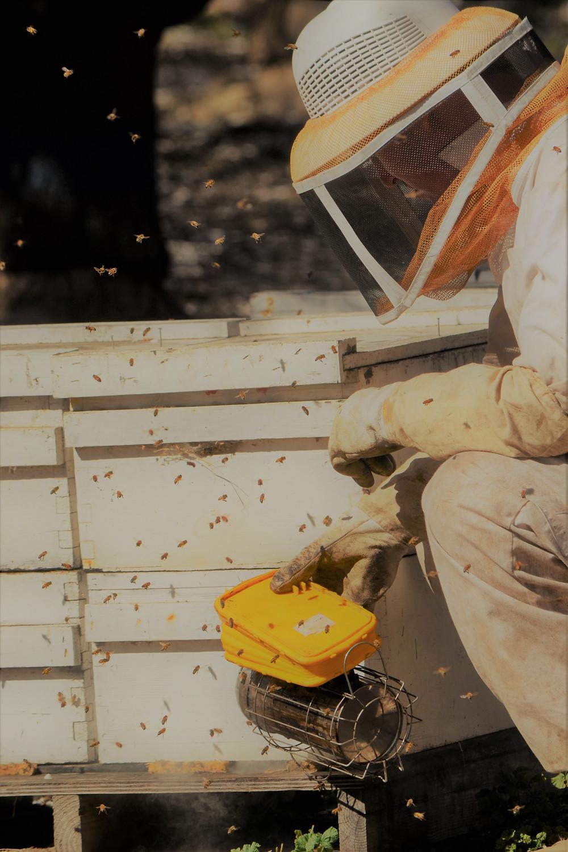 fresh pollen beekeeper