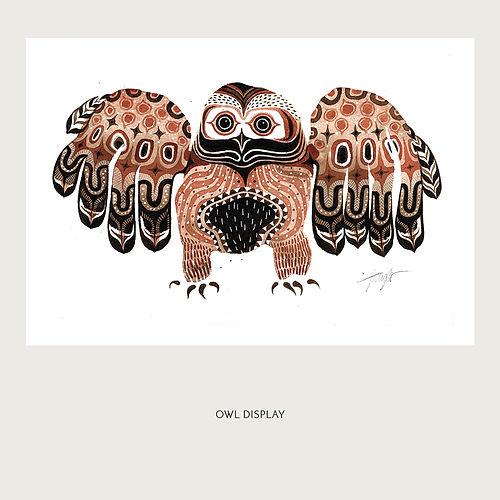 OWL DISPLAY.jpg