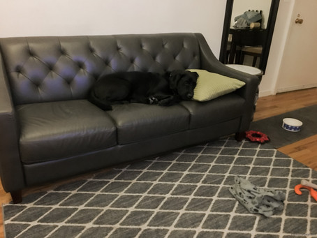 We're (Finally) Investing in a Good Couch: Part I
