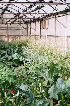 Crowded Greenhouse