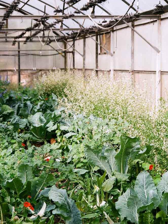 Arbeitstherapie Garten