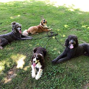 Jennifer's Dogs