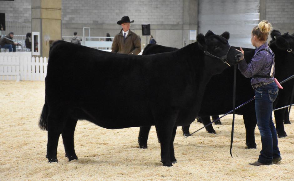K-Cow Empress 66D