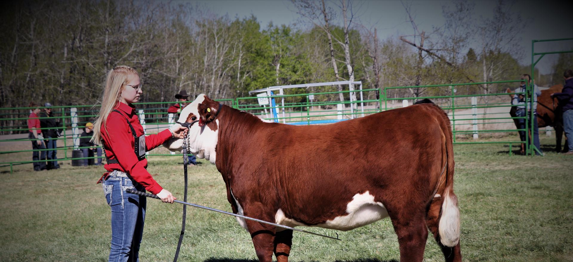 K-Cow Sheza Dream 145F