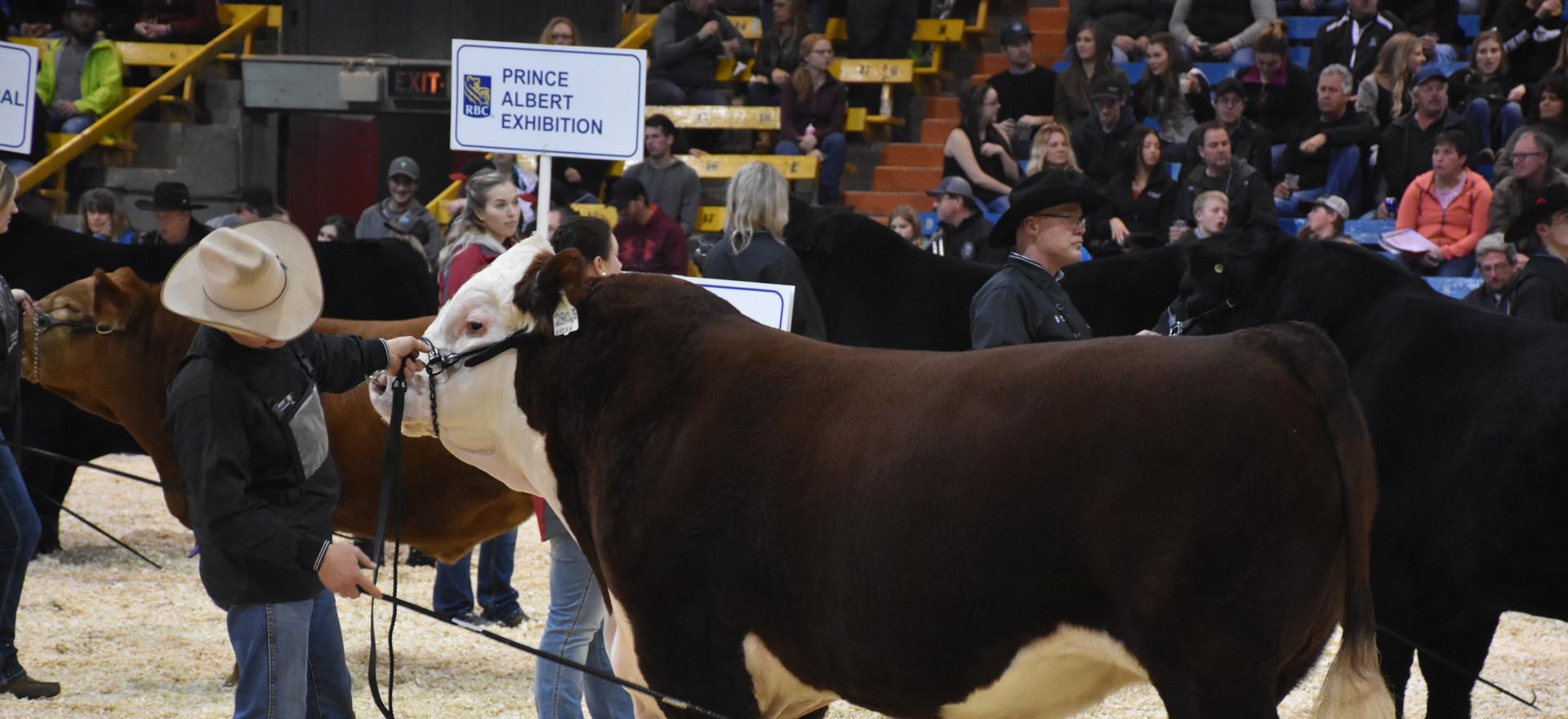 K-Cow Brier 280B