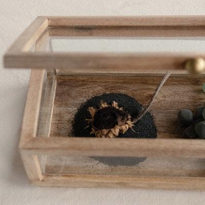 Mango Wood & Glass Display Box with Lid
