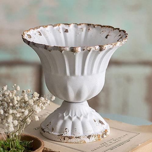 Medium Scalloped Cup - Box of 4