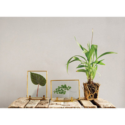 Glass & Brass Photo Frames with Stands (Set of 2 Styles)