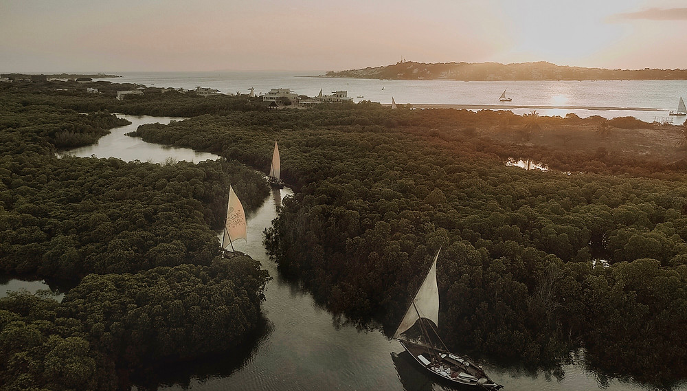 Dhows gather at sundet to sail the Kaskazi winds through the mangroves in the Lamu archipelago.