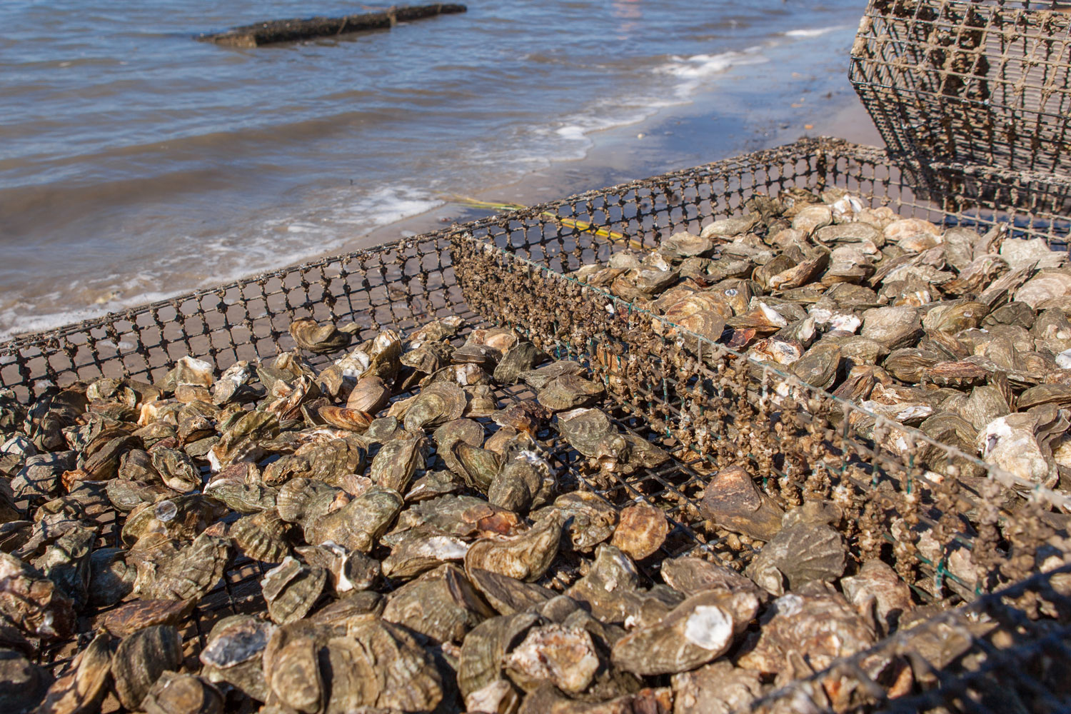 Oyster_Farm_Lowcountry.jpg