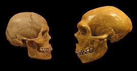 Human Evolution Homo sapiens v Neanderth