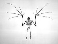 Mammal Origins Bat skeleton Messel Pit a