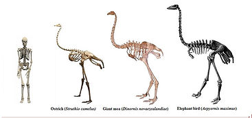 Giant birds size v human WI tnail smalle