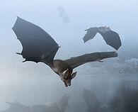 Mammal Origins Palaeochiropteryx Origina
