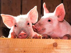 MAMMAL NAMES | Ewe Feral Swine!