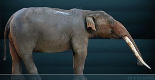 Megafaunal Extinctions American Armagedd