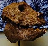 Megafaunal Extinctions Archaeoindris  sk