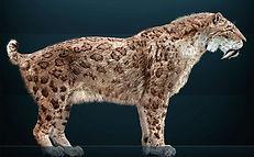 Megafaunal Extinctions Smilodon fatalis