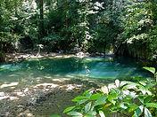 Mammal Origins Malaysian forest CC WI tn
