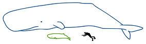 Mammal Names Pygmy sperm whale v Sperm w