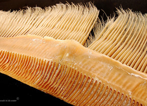 MAMMAL NAMES | Moustachioed Marine Monsters: