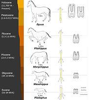 Mammal Origins No Powerful Steed Horse E