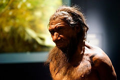 Megafaunal Extinctions Neanderthal recon