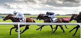 Mammal Origins Horse Racing Ireland CC W