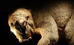 Megafaunal Extinctions Diprotodon optatu