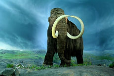 Ice Age Woolly Mammoth facing camera CC