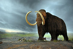 Woolly mammoth CC WI tnail smaller.jpg