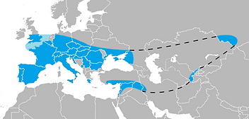 Ancient Love Neanderthal geographic rang