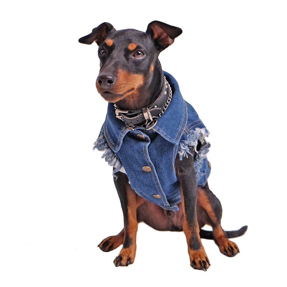 Dog Clothing Dog Fashion Doggie Jean Jacket