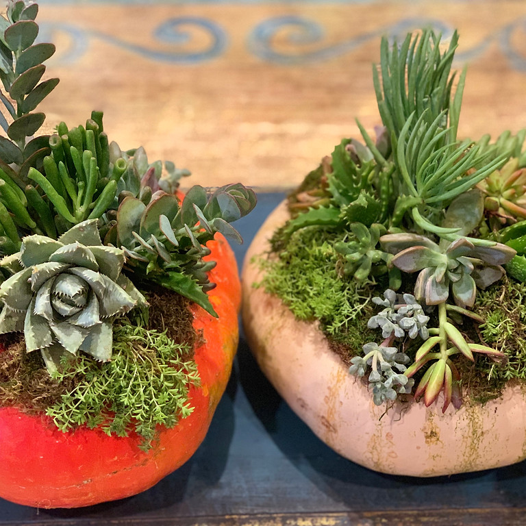 Private Event - Succulent Pumpkins with Heather S.