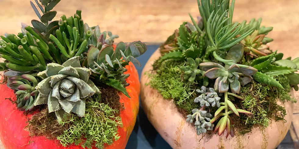 Private Succulent Pumpkin Event for Heather S.