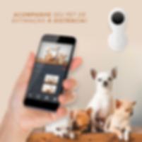 Aba Web Videomonitoramento em Nuvem / Consultoria em Telecomunicações / Pet Home.PNG