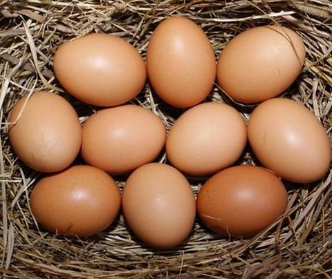 Fresh Farm Raised Eggs
