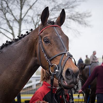 Winning Horses - 11 Mar 2017